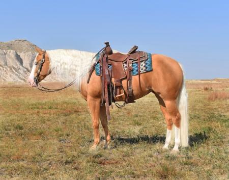 GUNMANS PERFECT TEN, American Quarter Horse Mare for sale in Nebraska