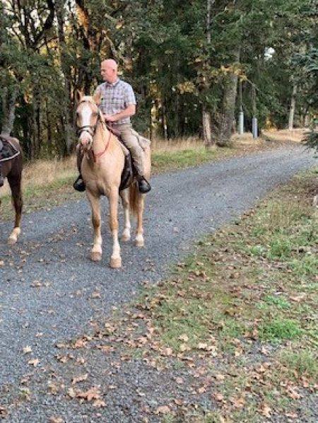 Hollywood, Palomino Gelding for sale in Oregon