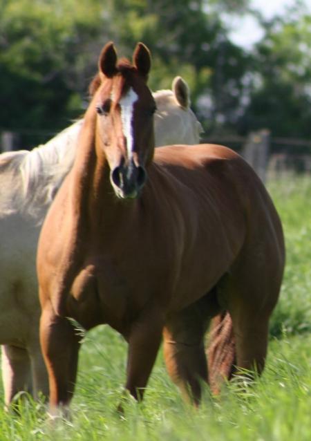Sheza Coolest Lady (mare in foal), Appaloosa Mare for sale in North Dakota