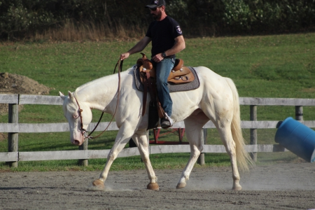 """Ice This """"Luca"""", American Quarter Horse Gelding for sale in New Jersey"""