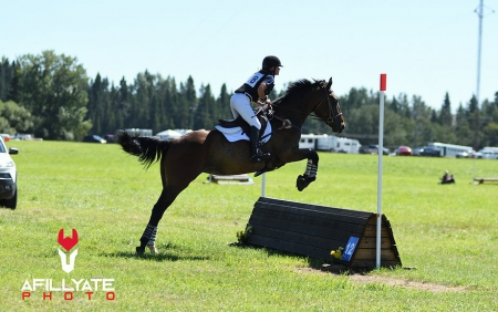DKH Counting Stars , Irish Sport Horse Mare for sale in Alberta