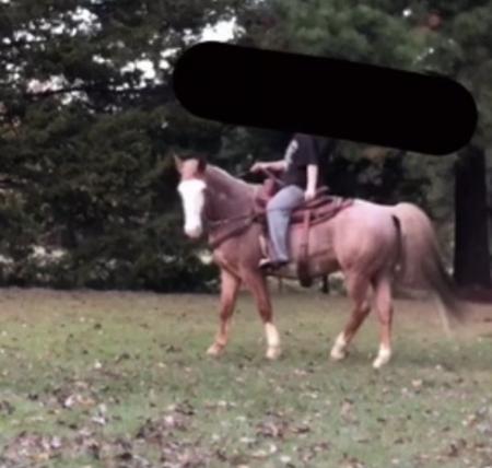 Roam, American Quarter Horse Gelding for sale in Mississippi
