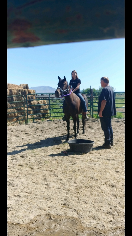 snickers, American Quarter Horse Mare for sale in Idaho