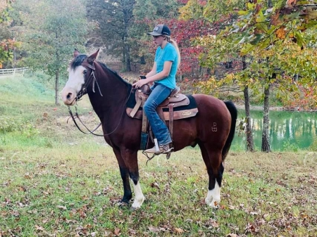 Durango , Ponies Gelding for sale in Missouri