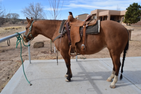 Poco Rap Cat, American Quarter Horse Mare for sale in Arizona