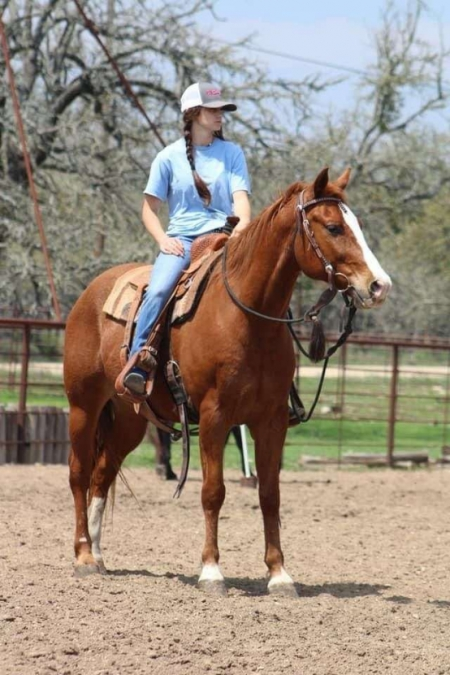 I AM A CD STAR, Quarter Horse Cross Gelding for sale in Oklahoma