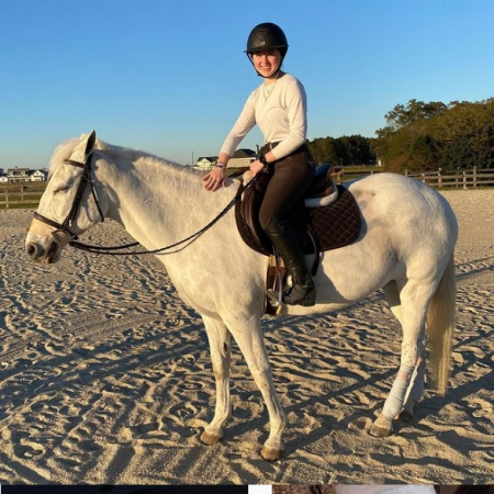 LEVI, Quarter Horse Cross Gelding for sale in Maine