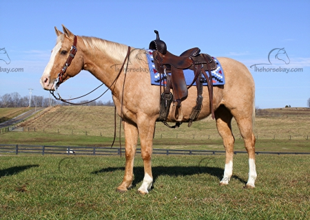 Easy on Soar Eyes, American Quarter Horse Gelding for sale in Kentucky