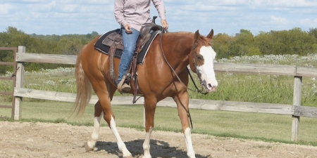 Badgers Bars, American Quarter Horse Gelding for sale in California