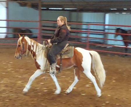 Princess, Other Mare for sale in Texas