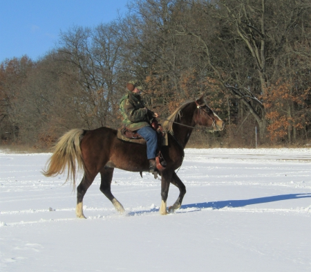 Zeus, Kentucky Mountain Saddle Horse Gelding for sale in Michigan