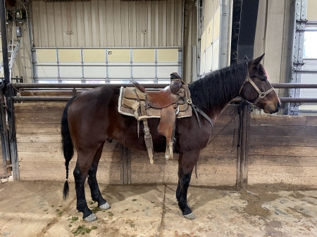 HEARTS SMART REMEDY , American Quarter Horse Gelding for sale in Texas