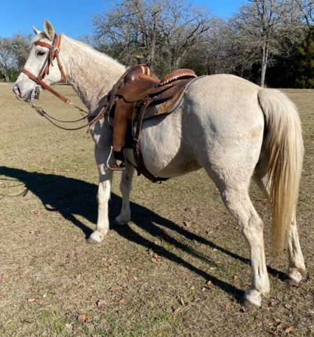Grey Mare AnnaB, Foundation Quarter Horse Mare for sale in Texas