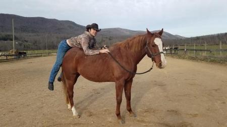 13 years old Quarter Horse gelding, American Quarter Horse Gelding for sale in Texas