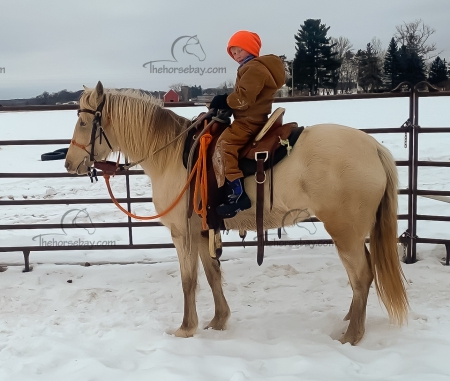 SGF's Platinum Plus (Peep), Rocky Mountain Mare for sale in Wisconsin