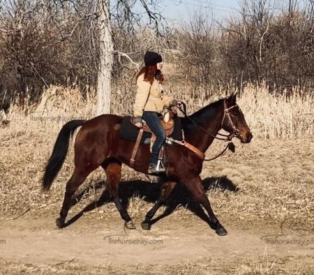 Peppys Telesis (Lena), American Quarter Horse Mare for sale in Colorado