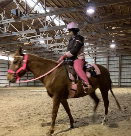 Willow, Quarter Pony Mare for sale in Pennsylvania