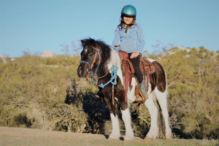 MISTY - A Gentle Talented CUTE Pony for Sale, Ponies Mare for sale in California