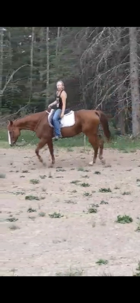 VS CODE RED GELDING (Cody), American Quarter Horse Gelding for sale in Michigan