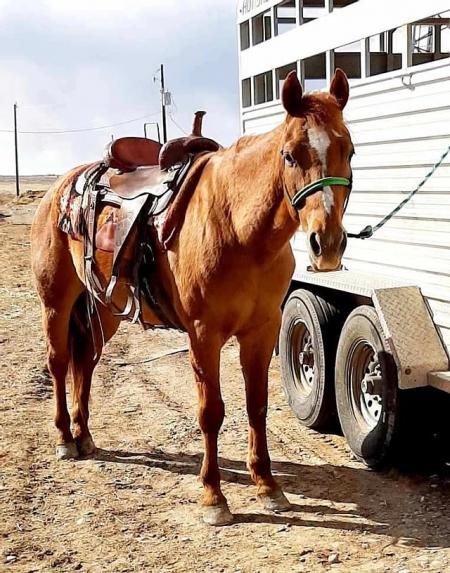 Leos, American Quarter Horse Gelding for sale in Illinois