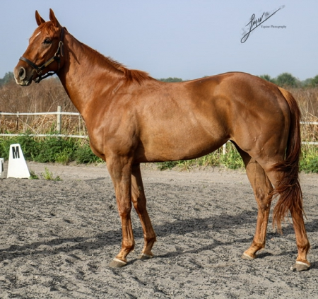 Letty Cat, Thoroughbred Mare for sale in Florida