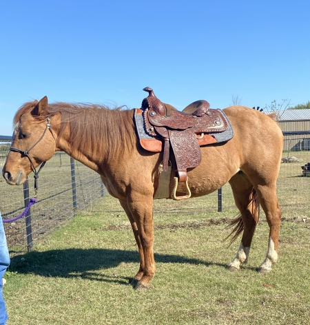 Hollywood Whyspers , American Quarter Horse Mare for sale in Texas