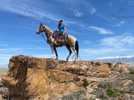 Lux - Alen's Boys Knight Out, National Spotted Horse Association Gelding for sale in Utah