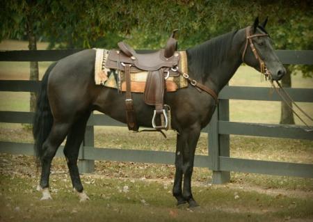 Jackie, American Quarter Horse Gelding for sale in California