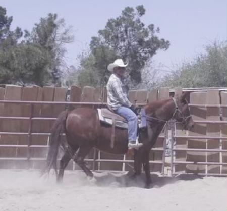 Coco, Paso Fino Mare for sale in California