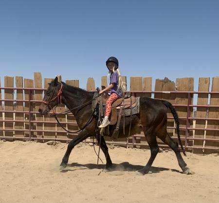 Aleta, Tennessee Walking Horses Mare for sale in California