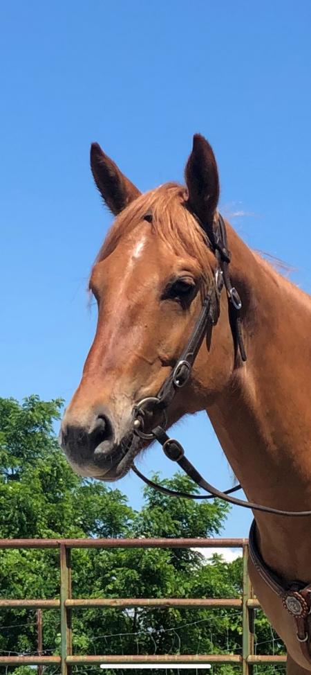 MB Kings Shiner, American Quarter Horse Gelding for sale in Kentucky