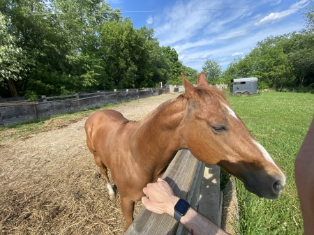 THUNDER, Ob Mare for sale in Wisconsin