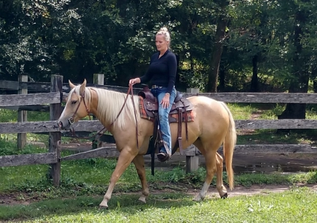 Cragos Double Gold, American Quarter Horse Mare for sale in Wisconsin