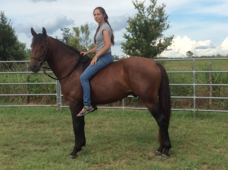 Diego Valerius, Andalusian Stallion for sale in Texas
