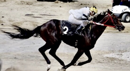 RUSHMORE , Thoroughbred Stallion for sale in Wisconsin