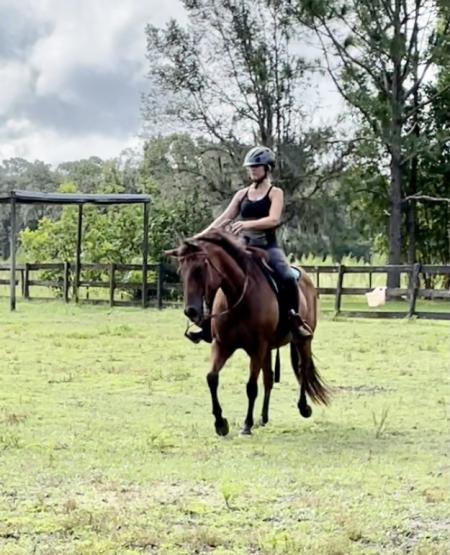 Daisy, American Quarter Horse Mare for sale in Florida