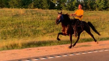 SAMSON, Single-Footing Horse Stallion for sale in Mississippi