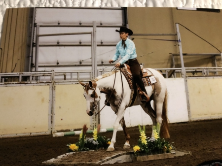 Dreaming Of A Hot Rod, American Paint Horse Association Gelding for sale in British Columbia