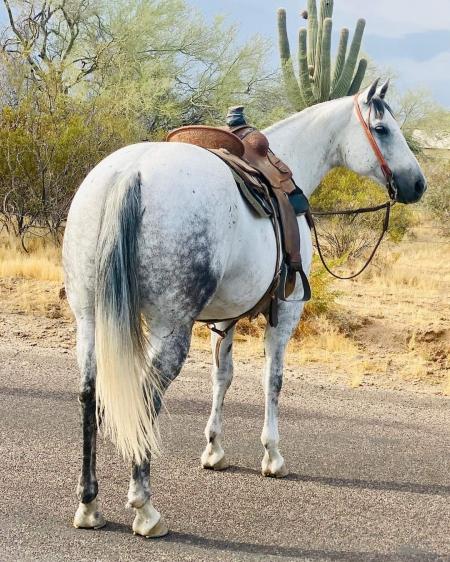 Smokey, American Quarter Horse Gelding for sale in Iowa