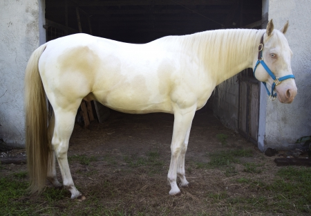 Just What We Ordered, American Paint Horse Association Stallion for sale in Florida