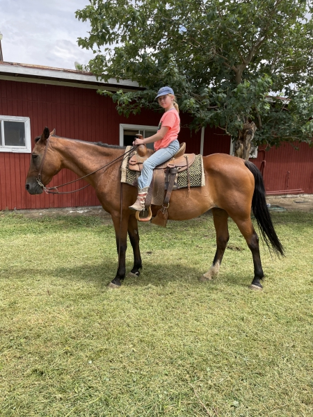 Memphis , Tennessee Walking Horses Mare for sale in California