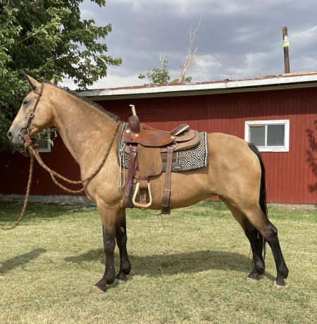 Push N My Lucky-Stars (Camille) , Tennessee Walking Horses Mare for sale in California