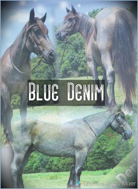 Blue Denim, Draft Cross Gelding for sale in Missouri