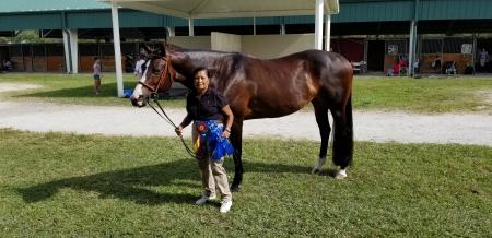 Dreamer, American Quarter Horse Mare for sale in Florida
