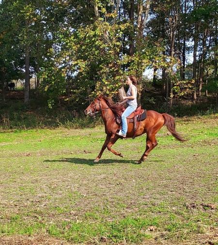 Dozer, Mustang Gelding for sale in Indiana