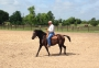 H Creek Colonel Travis, Curly Gelding for sale in Texas