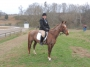 Scarlett O'Hara, American Quarter Horse Mare for sale in Tennessee
