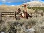 Gentle Quarter Horse Paint Gelding, American Quarter Horse Gelding for sale in Montana