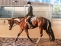 The Hunting Game, American Paint Horse Association Gelding for sale in California