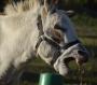 Prince, Donkey Jack at Stud in Florida
